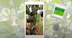 Sanbio PLANTA has rescued the eggplant harvest 2020